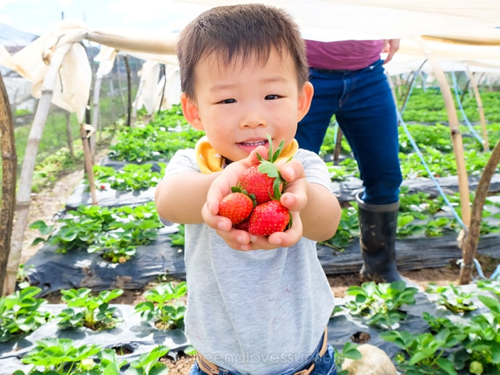 Strawberry Picking Baguio Kids