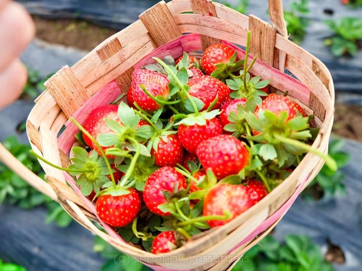 strawberry-3-min