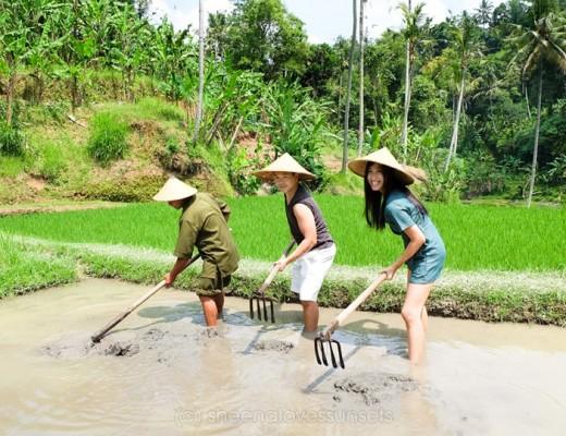 Four Seasons Sayan Balinese Farmer 15-min