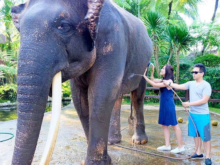 Elephant Safari Park Lodge Bali 1-min
