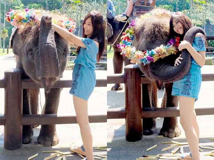 Elephant Safari Park Lodge Bali 11-min