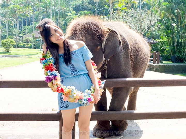 Elephant Safari Park Lodge Bali 12-min
