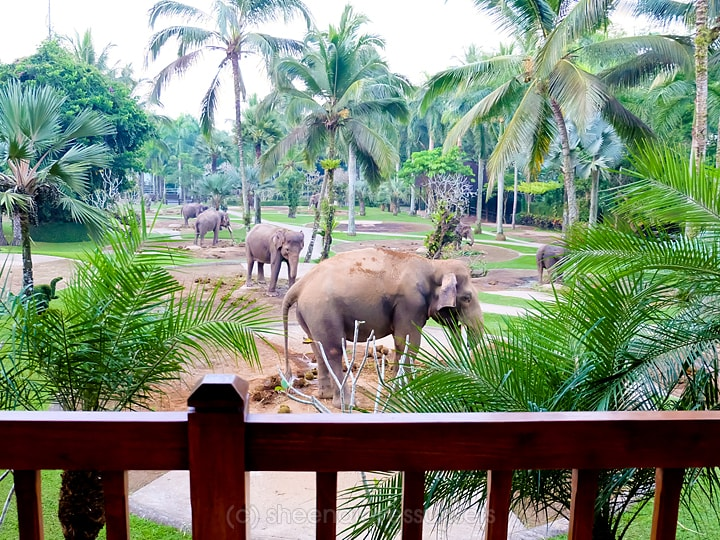 Elephant Safari Park Lodge Bali 15-min