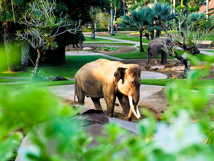 Elephant Safari Park Lodge Bali 19-min