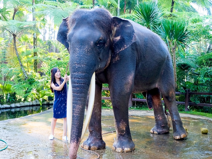 Elephant Safari Park Lodge Bali 2-min