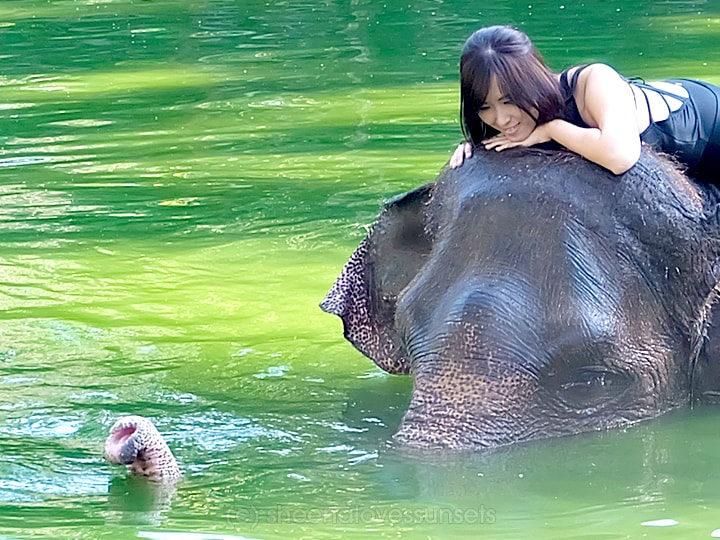 Elephant Safari Park Lodge Bali 21-min