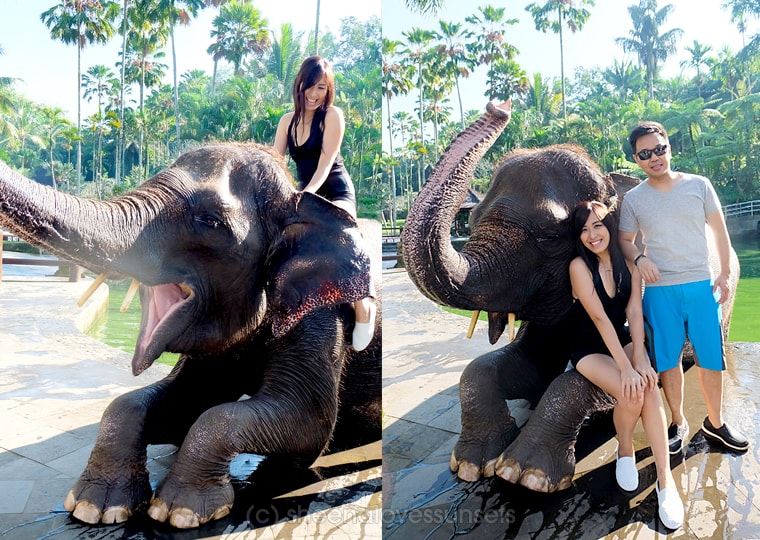 Elephant Safari Park Lodge Bali 26-min