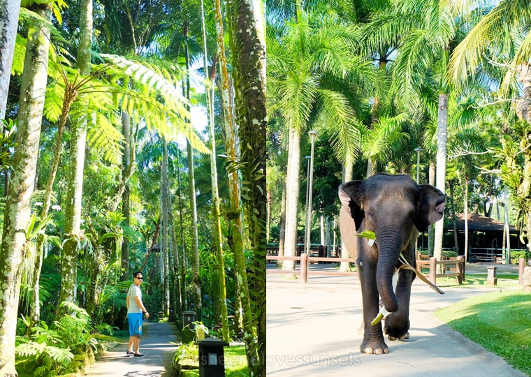 Elephant Safari Park Lodge Bali 31-min