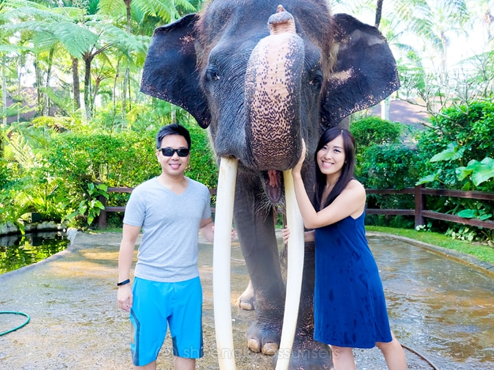 Elephant Safari Park Lodge Bali 32-min