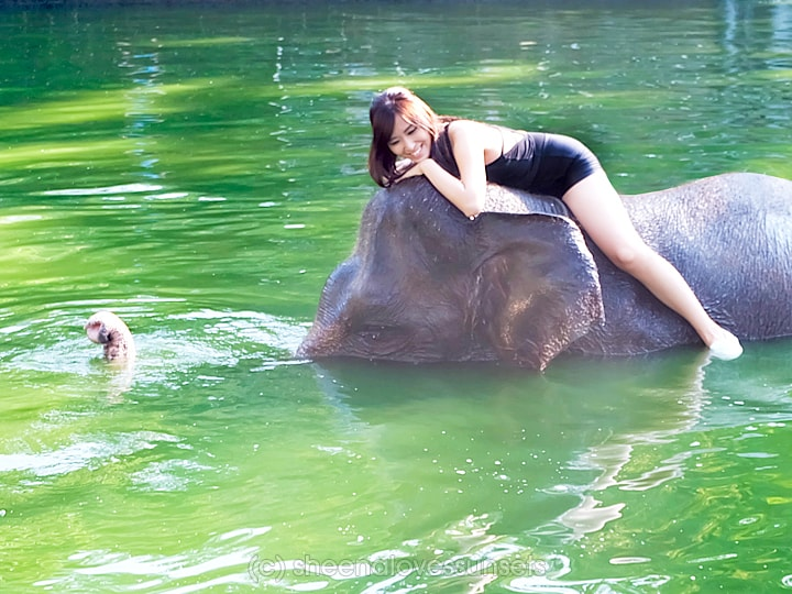 Elephant Safari Park Lodge Bali 4-min