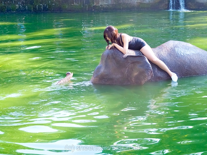 Elephant Safari Park Lodge Bali 5-min