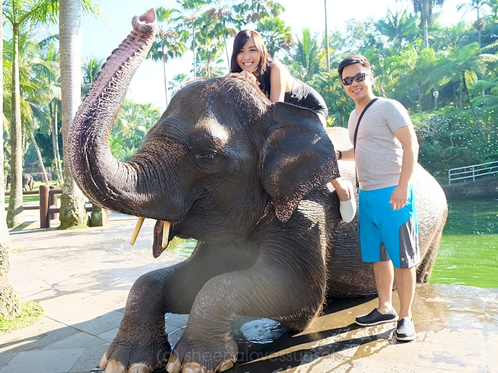 Elephant Safari Park Lodge Bali 6-min